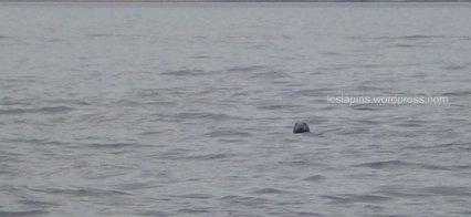 Fuck, digo, foque, digo, foca!